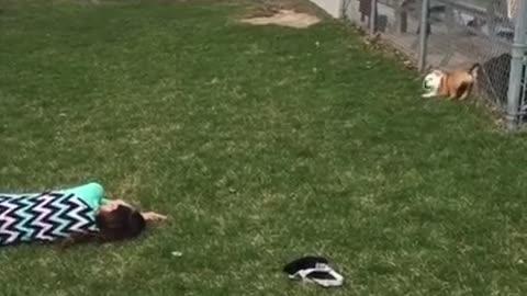 Baby Bulldog Chases Little Girl