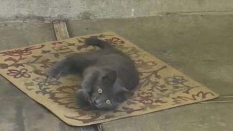 An Adorable Stray Kitten on Our Carport