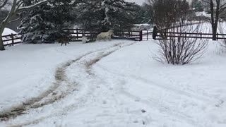 Pony Makes for a Great Sledding Experience