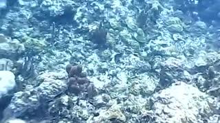 Grand Cayman Island Snorkeling 2018