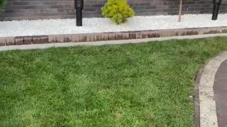 Landscape design of rolling lawns