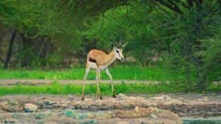 Nature Documentary Film ( Music Relax ) Amazing Wildlife of Botswana