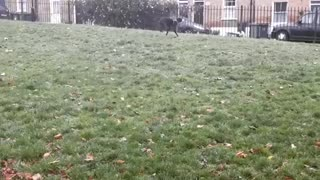 Charle Dogy Training OutDoors