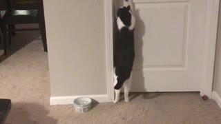 Closed Door Can't Stop Cat