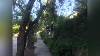 Beautiful San Diego, California #sunsets#photography#Covid#2020#BankersHill#BalboaPark