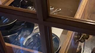 Doggy Locks Door With Open Drawer