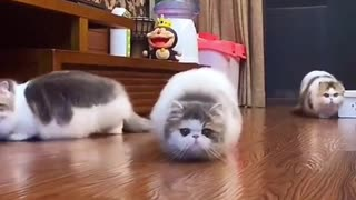 Funny Dog Videos 2021🤣🤣 🐶