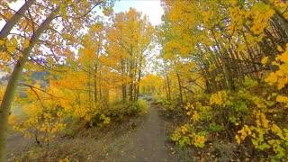 Fall Colors - North Lake, Bishop, CA