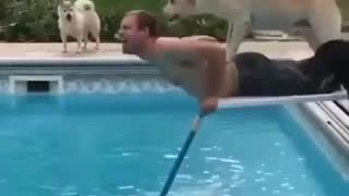 Dog Just want to help
