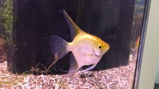 Our aquarium 3