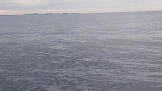 Whale jumps Out