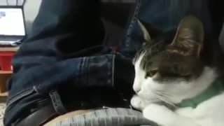 A polite cat responds bless you after you sneeze