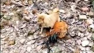 funny scared dog