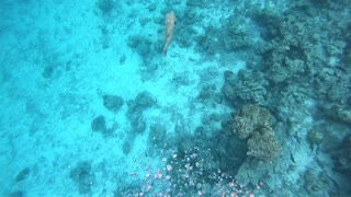 Bubble Rings vs Giant Puffer Fish