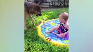 These funny dogs and kids