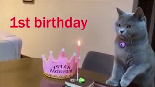 Happy birthday your pets🎂🎉-dogs and cat reaction to birthday🐕 super dog
