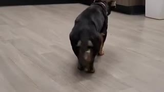 happy dog dancing very funny