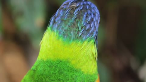 Parrot bird colorful animal color cute