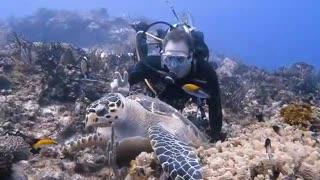 Diver Perform Selfie With Creatures Under water