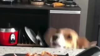 perrito trying to eat