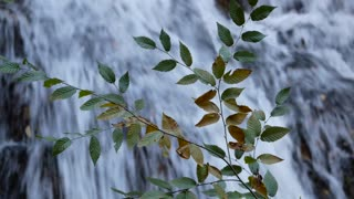 Watch Forest Waterfall Footage