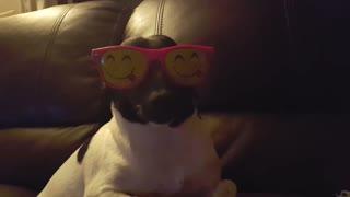 A dog wearing a funny sunglasses