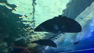 at the israel aquarium