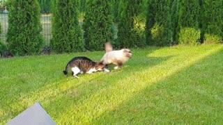 Pro stuntcats on green grass