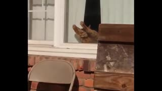 Another funny videos of cats