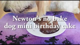 Your dog's standard birthday cake, easy to make.