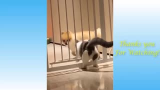 Cute Pets and Others Funny Compilation