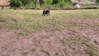 Rocky and Rosie dog park play