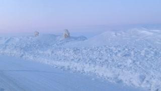 Polar Bears Wander Alaskan Road