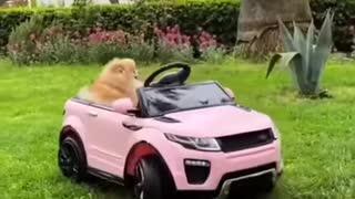 fast and furious dog hahahaha