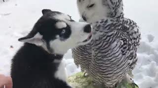 Polar brothers