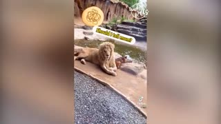 Funny Animals /dog video