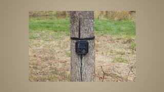 BuckEye Cam Wireless