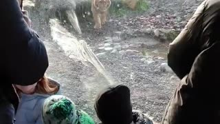 These kids would be tasty morsels for this hungry tiger