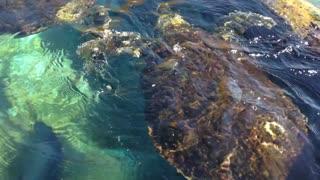 Beautiful big turtle