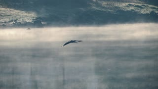 Female Bird Flying Throw Fog Morning Day