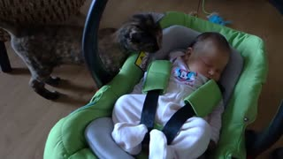 Cats Meeting Babies Compilation