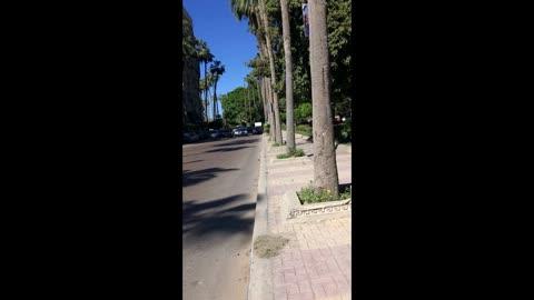 Alexandria. Walks