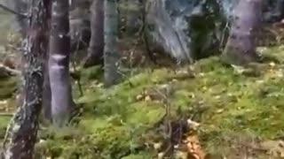 Strange Video #185