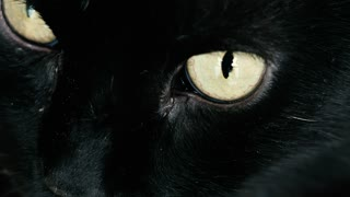 Extreme close-up of a black cat blinking yellow eyes.