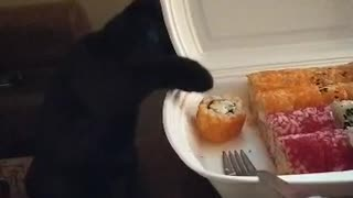A cat named Greta tries to steal sushi