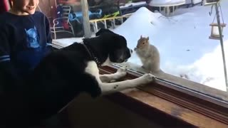 Cute dogs and cats fighting