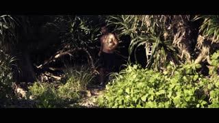 Motivation Video | Peter McKinnon 72 Hour Short Film Challenge