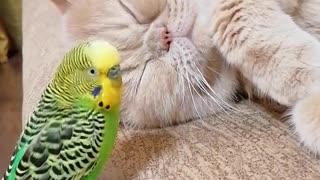Кот и птица, милые животные #2