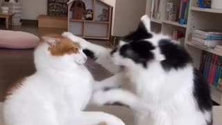 Strange cat attack