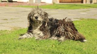 Nice dog wants to sleep on grass